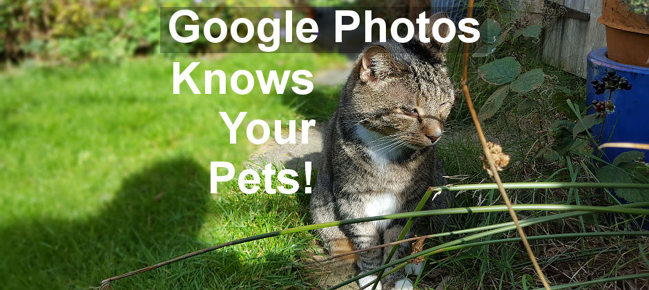 Google Photos can now recognise your pets, such as your dog or cat. It groups them with people.