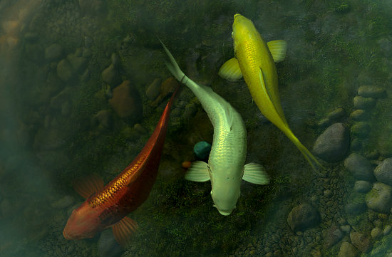 Get amazing live wallpaper and screensavers for your mac - 3d koi pond live wallpaper iphone ...